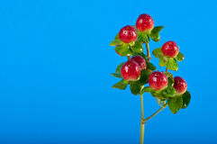 Sprig of berries Royalty Free Stock Photography