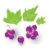 A sprig of black currants, vector illustration. On white background Stock Photos