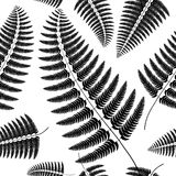 Sprig of black fern on a white background. Stock Photo