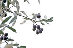 Sprig with black olives isolated on white background Stock Photos