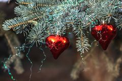 A sprig of a blue fir tree with two red glass hearts with rainbow Christmas decorations. Is on a blurred background royalty free stock images
