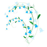 Sprig of harebell Stock Images