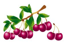 Sprig of cherry. Raster version of vector image of a sprig of cherry Stock Image