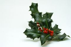 Sprig of Christmas holly. Green holly leaves and red berries Stock Images