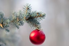 Christmas tree with of hanging ball. Sprig of christmas tree with of hanging ball covered hoarfrost. Selective focus Stock Photography