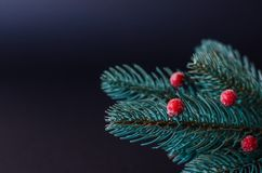 Sprig of Christmas trees with red berries. stock photography
