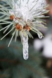 Sprig congelado Imagens de Stock Royalty Free