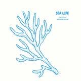 Sprig of coral. Vector hand drawn graphic illustration. Vintage marine sea life sketch stock illustration