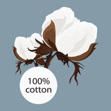 Sprig of cotton. That says 100% blue background Stock Images