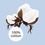 Sprig of the cotton. With the words 100 Stock Photography
