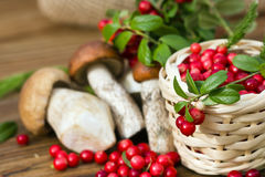 Sprig of cranberries lying on a basket filled with red berries, on a background of mushrooms Stock Images