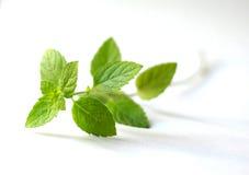 Sprig das folhas de hortelã imagem de stock