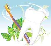 Sprig del dente, del toothbrush e della menta royalty illustrazione gratis
