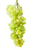 Sprig der frischen grünen Trauben Lizenzfreie Stockbilder
