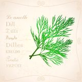 Sprig of dill in vintage style. A dill branch in vintage style with text Stock Image