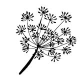 A sprig of dill the drawn contour. Sprig and fennel seeds are drawn with a black outline Stock Photography
