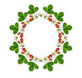 Sprig of flowers strawberries Stock Image