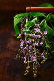 Sprig of fresh flowering sage Stock Photo