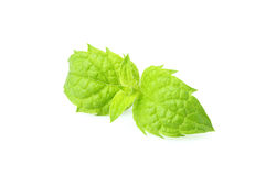 Sprig of fresh mint. Sprig of fresh mint isolated on a white background Royalty Free Stock Photos