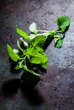 Sprig of fresh peppermint. Used as a potherb and flavoring in cooking lying on a dark grey textured slate surface with copyspace Stock Photo