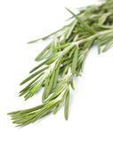 Sprig of fresh rosemary Stock Images