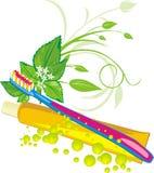 Sprig, gotas, toothbrush e pasta da hortelã Imagem de Stock