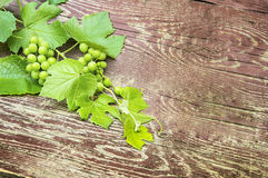 Sprig of grapes with leaves on wooden background Royalty Free Stock Image