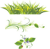 Sprig, grass and ladybird. Sprig with flowers, grass and ladybird. Three isolated compositions. Vector illustration Stock Photo