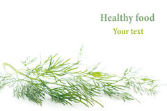 Sprig of green dill on a white background. Frame with copy space for text. Isolated, Royalty Free Stock Photography