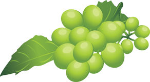 Sprig of green grape. Illustration Royalty Free Stock Images