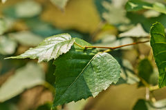 Sprig with green leaves Stock Photos