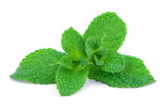 Sprig of green mint Royalty Free Stock Photos
