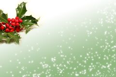 Sprig of holly berries Royalty Free Stock Images