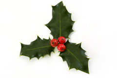 Sprig of holly with berries over white. Sprig of holly with berries on a white background Stock Image