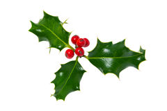 Sprig of holly isolated on white Royalty Free Stock Photo