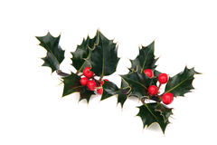 Sprig of holly with red berries Stock Photos