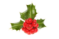 Sprig of Holly Royalty Free Stock Image