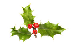 Sprig of Holly Stock Image