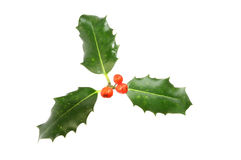 Sprig of Holly stock photo