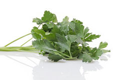Sprig of Italian Parsley Royalty Free Stock Photos