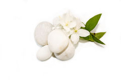 Sprig of jasmine and sea stones Royalty Free Stock Images