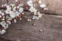 Sprig kwiatonośne morele kłama na drewnianym tekstura stole zdjęcie stock