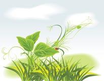 Sprig and ladybird among grass Stock Photos