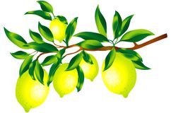 Sprig of lemons. Raster version of vector image of a sprig of lemons Royalty Free Stock Image
