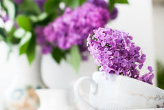 Sprig of lilac in a cup Royalty Free Stock Image