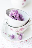 Sprig of lilac in a cup Stock Image