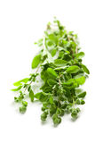 Sprig of marjoram Stock Photos