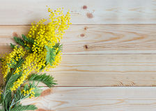 A sprig of mimosa Stock Photo