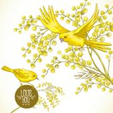 Sprig of Mimosa and Yellow Bird, Spring Background Stock Images