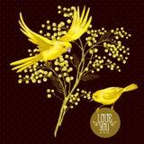 Sprig mimozy i koloru żółtego ptak, wiosny tło Obrazy Royalty Free